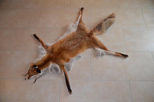 Fuchsfell, offen gegerbt in Pelzqualität
