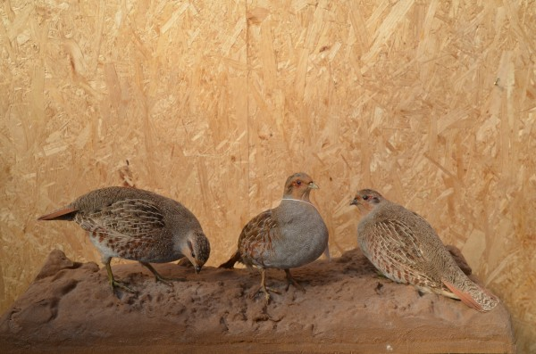 3 Rebühner